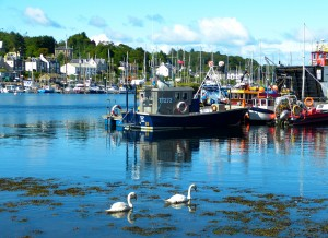The swans of Tarbert